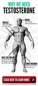 Best 25  Low Testosterone Ideas On Pinterest