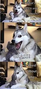 HAPPY HUSKY MEMES image memes at relatably.com