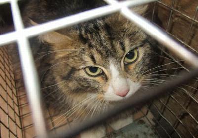 Dzīvnieki Kaķi, kaķēni: Meklē mājas - Pērc un Pārdod