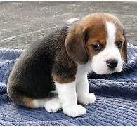 Cute Sad Puppy Dog Face