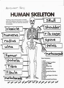 Anatomy Coloring Pages Coloring Page Free Printable Human