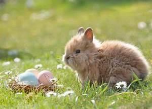Eier Kochen Zum Färben : eier im topf kochen anleitung wie lange f r weich hart ~ A.2002-acura-tl-radio.info Haus und Dekorationen