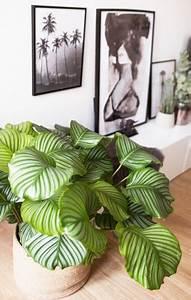 Dekorative Pflanzen Fürs Wohnzimmer : die besten 25 wohnzimmer pflanzen ideen auf pinterest pflanzen dekor zimmerpflanzen und pflanze ~ Eleganceandgraceweddings.com Haus und Dekorationen