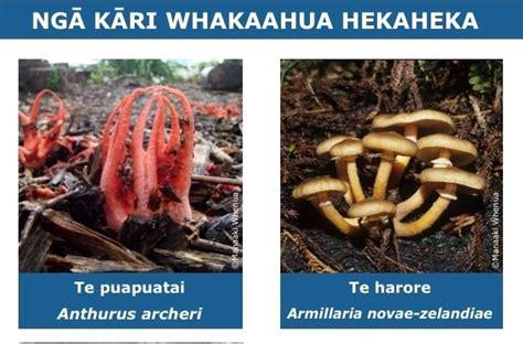 Ngā kāri whakaahua hekaheka | Fungi, Stuffed mushrooms ...