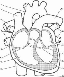 The Mammalian Heart Quiz